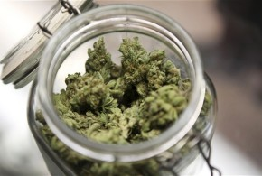 Prescrizione della marijuana: l'opinione di Piergiorgio Strata
