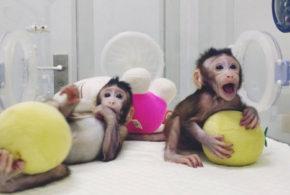 Inseguendo le scimmiette cinesi