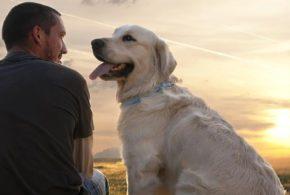 Il rapporto con i pet è più facile perché non ci contraddicono mai